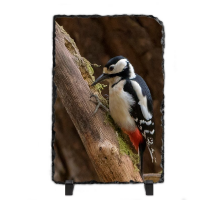 Greater Spotted Wood Pecker FB_07_LS